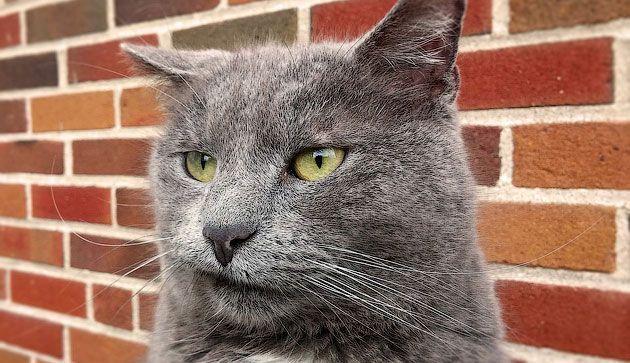 Сайт про котиков